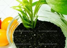 seaweed-extract